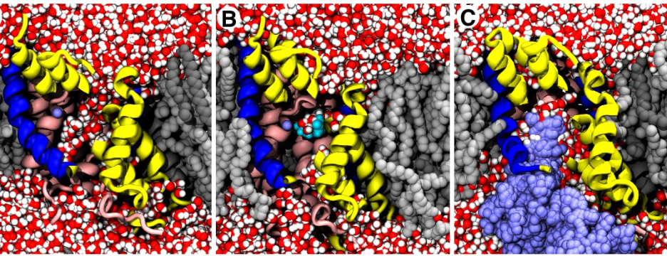 Atomically detailed molecular dynamicssimulations